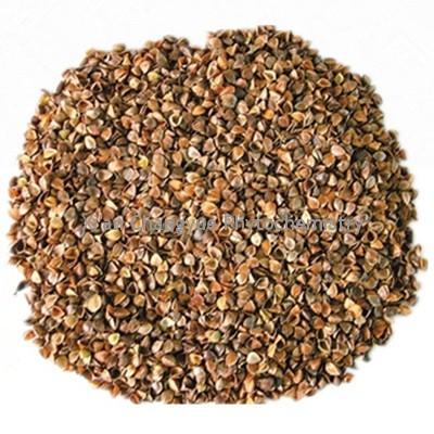 Buckwheat extract 10:1 15:1 20:1