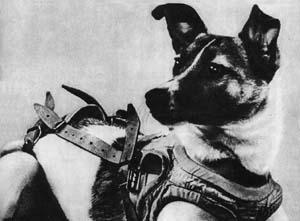 laika_soviet_dog