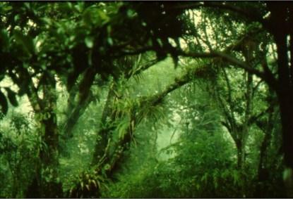 bosque-macuiltepetl-690x460