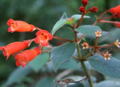flor-medicinal