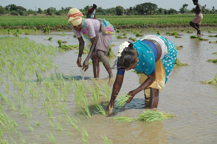 farm sectors reforms in india