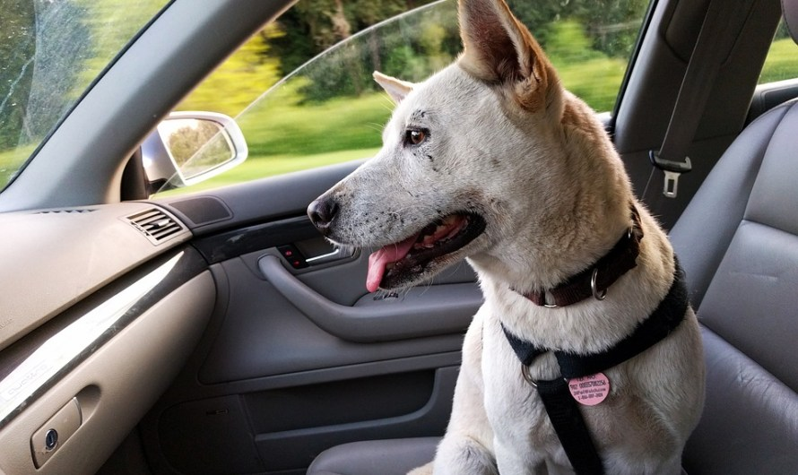 Uber now Lets Four-Legged Family Members Join Rides –in Certain Cities — for a Small Fee