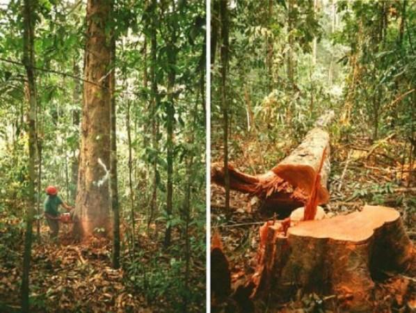desmatamento-100porcentoaprendizagem-blog