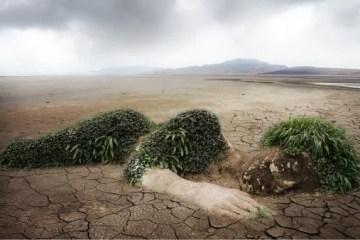 Ambientalistas
