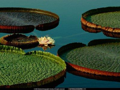 National Geographic - Green circles
