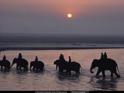 National Geographic - Elephant