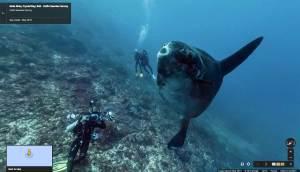 Google nous fait découvrir les océans.
