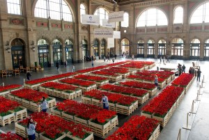 Internet mobile: Swisscom offre des fleurs et se contredit. Faites des économies!