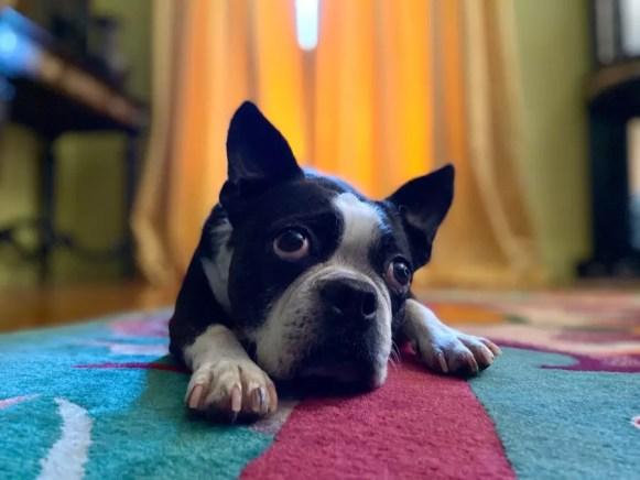 Apple iphone 11 dog portrait mode 091019
