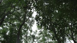 Frame grab, shooting through trees. 35mm Xenon FF and A7s.