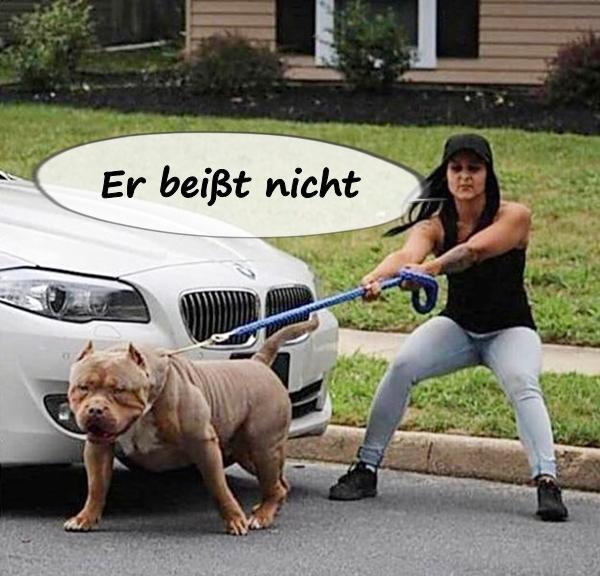 Chico Der Hund Photos Facebook