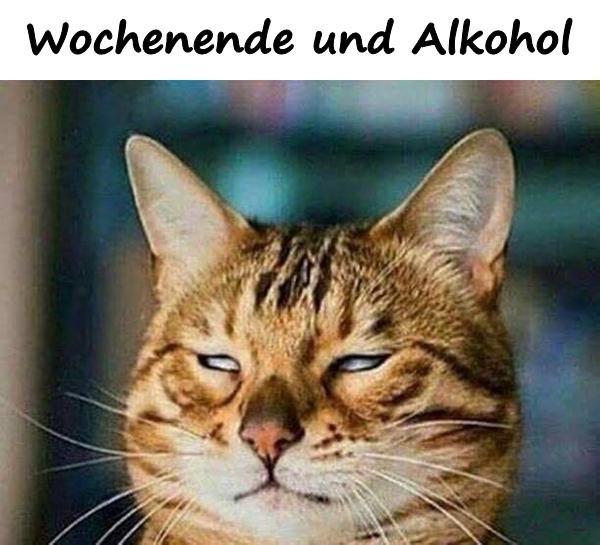 Lustige Bilder Katzen Mit Spruchen Bilder Und Spruche Fur