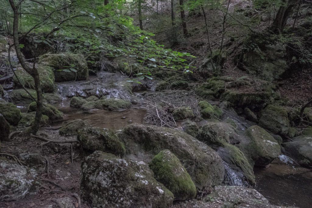 Twannbach mit wenig Wasser