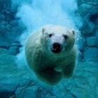 Top 10 de animales en peligro de extinción.