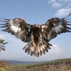 Un águila dorada se lleva a un niño