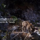 Cumple 5 años el decreto de Área Natural Protegida de Tonalá