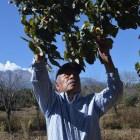 Fruticultura una alternativa real para la Mixteca