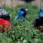 Sin cumplir demandas de jornaleros agrícolas en Baja California
