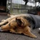 Denuncian pobladores de Teposcolula que la autoridad envenenó a perros