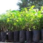 Implementa SEDAPA programa de reforestación en la Mixteca