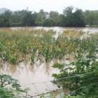 Por las lluvias ahora se desborda el río Mixteco en Tecomatlán
