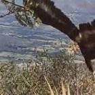 Registran una familia de águila real en Coixtlahuaca