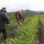 El campo mixteco, requiere del apoyo de instituciones para detonar economía