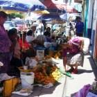 Empieza a surgir plaga en la fruta de temporada de la Mixteca