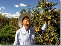 Fruticultura revierte problemática del campo en Tulancingo (1)