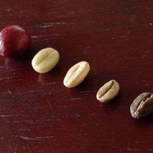 Introduccion al cafe - Xeridas coffee