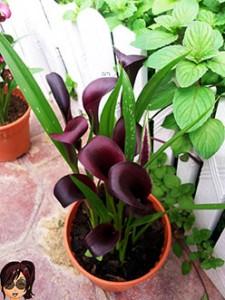 Herbs-garden2
