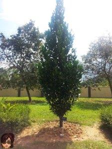 Happiness Tree