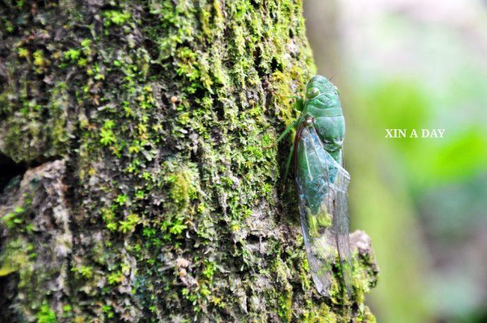 Sungai Tua Recreational Forest @ Gombak