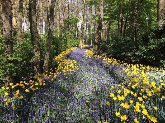 דרך צבוענית יפה בטבע