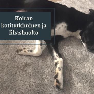 Koiran kotitutkiminen ja lihashuolto