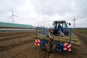 Pflanzung von Pappelruten auf 50-70cm Tiefe