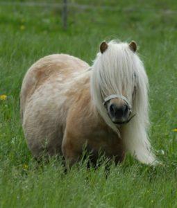 Lottie/Bianca i hästböckerna om Isa och Minigänget