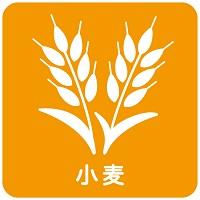 169.wheat-allergy