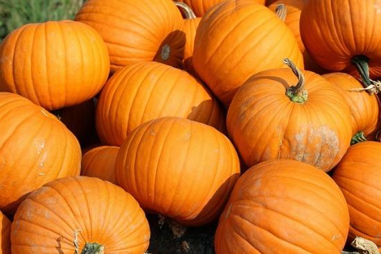 189.pumpkin3