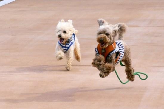 犬が走っている画像