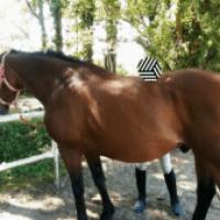 [DOSSIER N°22] L'équitation