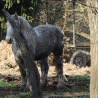 Un petit poney tout griiiiiiis !