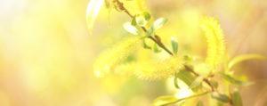 Willow Weide Verzagtheit und Verzweiflung Lemon Pharma Original Bachblüten