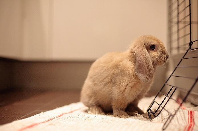 ねこもウサギも癒される おしゃれなキッチン001