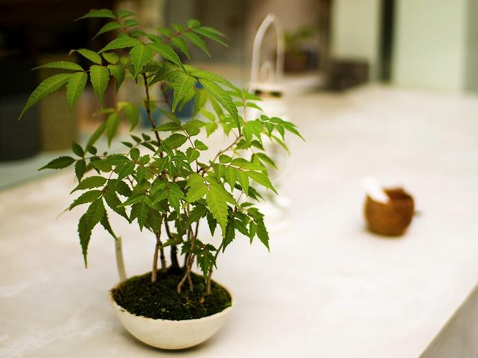観葉植物をインテリアに 参考になる画像000