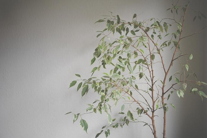 観葉植物をインテリアに 参考になる画像007