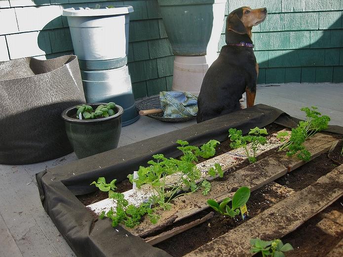 お庭でガーデニング・観葉植物をもっと可愛くおしゃれに!プランター・鉢を木製パレットでDIYする
