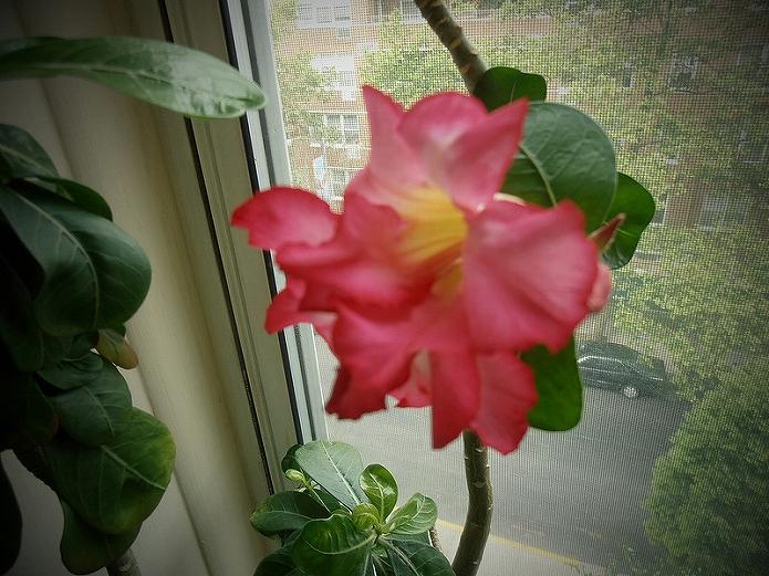 観葉植物が窓際にあるだけで素敵な雰囲気のインテリアになる
