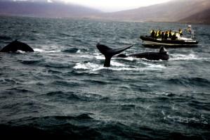 Foto Akureyri Islanda di Elena Fornai
