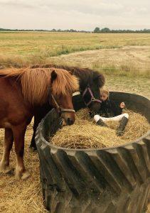 hestehygge på ridecenter